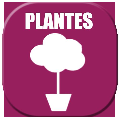 plantes-blanc Tentes 5x4 ou 5x8